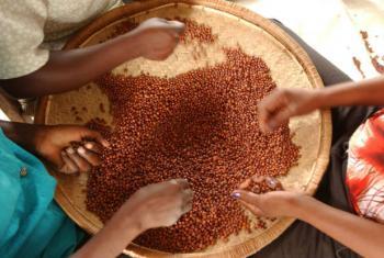 Leguminosas fazem parte da dieta tradicional e geralmente são produzidas por pequenos agricultores.Foto: FAO/Giuseppe Bizzarri