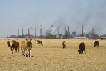 Fenômenos climáticos afetam de forma negativa as plantações, o gado, a pesca e o meio de subsistência de muitas pessoas.Foto: John Hogg/ Banco Mundial