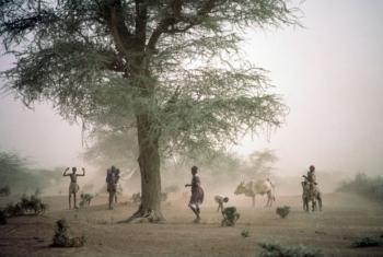 O projecto deve crescer e está planeada a inclusão da tecnologia móvel para a partilha de informação com os agricultores.Foto: ONU/Ray Witlin