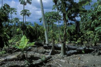 São necessárias ações climáticas para preservar o planeta. Foto: Banco Mundial