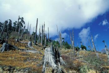 Aproximadamente 1 bilhão de pessoas dependem diretamente das florestas para sua subsistência e a cada ano, cerca de 12 milhões de hectares dessas florestas são destruídos.Foto: Banco Mundial/Curt Carnemark