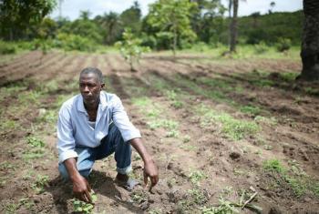 A parceria quer também promover o desenvolvimento rural sustentável e diminuir as desigualdades no campo. Foto: Banco Mundial/Dominic Chavez