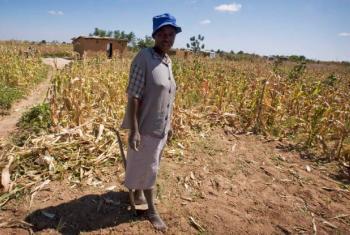 Seca no Zimbábue. Foto: Irin/Kate Holt