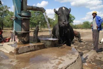 Parceria apoiou iniciativa sobre meios de subsistência e segurança alimentar no Zimbabué. Foto: FAO.