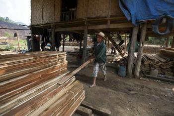 Aumento na produção global de madeira. Foto: FAO