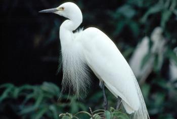 Aves migratórias percorrem milhares de quilômetros. Foto: ONU/John Isaac