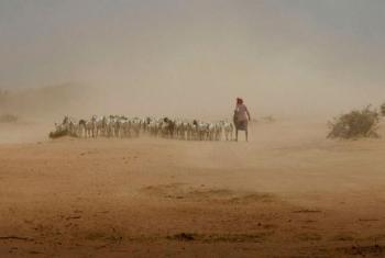 Seca causada pelo fenómeno climático El Niño. Foto: Ocha