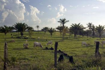 Segundo José Graziano da Silva, 70% dos pobres que vivem em áreas rurais dependem da pecuária. Foto: ONU/Eskinder Debebe