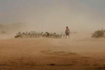 Várias regiões na Etiópia enfrentam um agrave seca devido ao fenómeno El Niño. Foto: Ocha