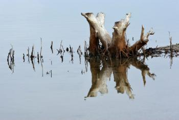 Pântano no Timor-Leste. Foto: ONU/Martine Perret