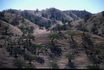 Iniciativa quer ajudar os países a avaliar os potenciais benefícios florestais em termos de recursos hídricos. Foto: Pnuma.