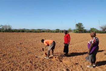 Seca no Zimbabué. Foto: Reprodução vídeo PMA