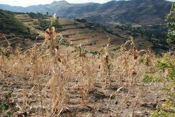 Seca na Etiópia. Foto: PMA/Stephanie Savariaud (arquivo)