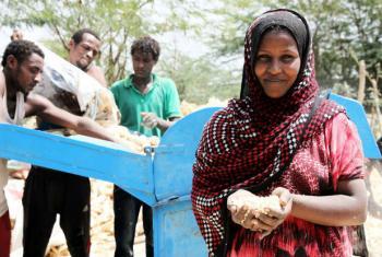 A insegurança alimentar já atinge 224 distritos na Etiópia.Foto: FAO/Tamiru Legesse