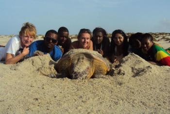 Tartaruga marinha em Cabo Verde. Foto: ONU Cabo Verde
