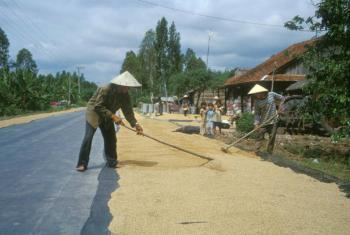 Produtores de arroz no Vietnã. Foto: FAO/J. M. Micaud