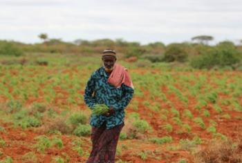 Foto: FAO/Frank Nyakairu