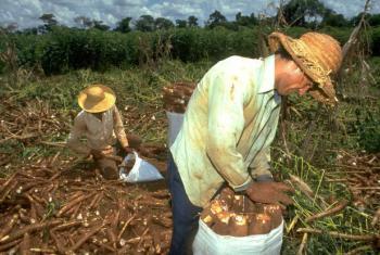 Promoção da agricultura familiar. Foto: Ifad/Giuseppe Bizzarri