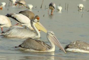 Dia Mundial das Aves Migratórias. Foto: Pnuma