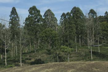 Floresta na Costa Rica. Foto: Banco Mundial/Flore de Preneuf