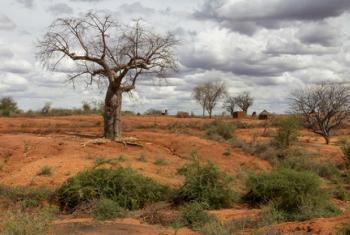 Dia Mundial de Combate à Desertificação é esta sexta-feira, 17 de junho.Foto: Banco Mundial/Flore de Preneuf