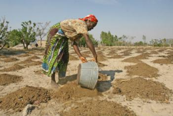 A FAO busca aumentar ainda mais a produção local através da distribuição de sementes de vegetais. Foto: FAO/Desmond Kwande