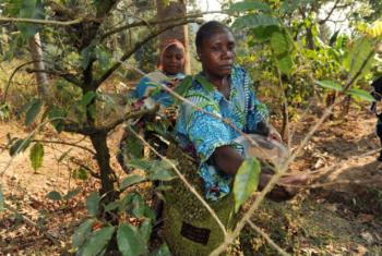 Segundo a FAO,não é preciso acabar com as florestas para produzir mais alimentos.Foto: FAO/Simon Maina