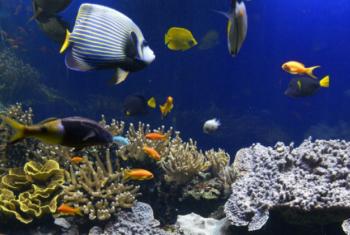 A poluição e a mudança climática causam sérios riscos para os ambientes costais e marinhos.Foto: Aiea/J.L. Teyssie