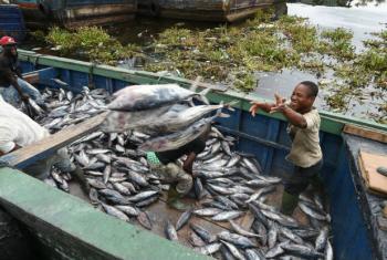 Os subsídios de pesca são considerados prejudiciais e agravam o problema ao estimularem as frotas de pesca industrial a ir para águas costeiras de países em desenvolvimento onde saem em vantagem so competir com pescadores locais de pequena escala. Foto: F