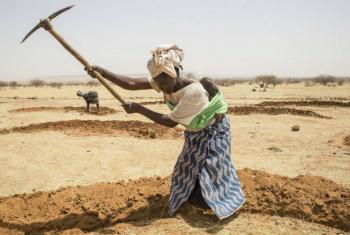 Mulher prepara terra no Níger. Foto: FAO/Giulio Napolitano