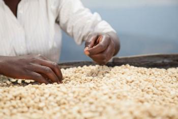 """O Brasil é o único país lusófono citado no relatório como um dos produtores de café que tendem a """"proteger a propriedade intelectual para capitalizar seus ativos intangíveis. Foto: Banco Mundial/A'Melody Lee"""