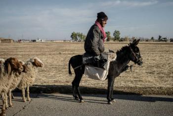 Foto: FAO/Cengiz Yar