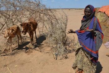 Seca na Etiópia. Foto: PMA/Melese Awoke (arquivo)