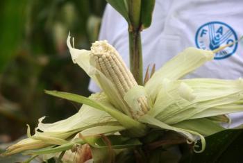 Plano encoraja inclusão de agricultores. Foto: FAO.