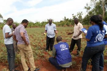 Dr. Sammy Agili, do Centro Internacional da Batata (ao centro), explica a técnicos da OIM como cultivar a batata-doce de polpa alaranjada. Foto: OIM/Birgen Cyprine