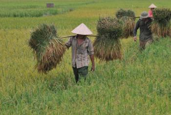 Foto: FAO/Hoang Dinh Nam