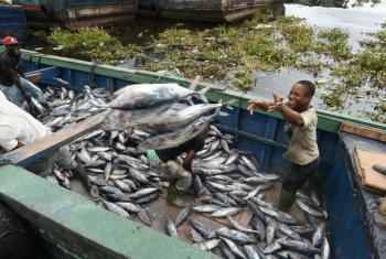 Pescadores descarregam atum no porto industrial de Abidjan, na Costa do Marfim. Foto: FAO/Sia Kambou