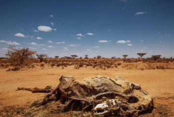 Seca na Somália. Foto: OIM/Muse Mohammed