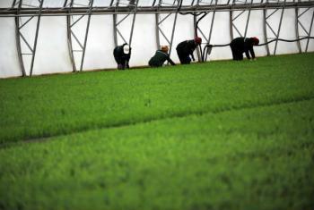 Nos países de baixa renda, o crescimento gerado pela agricultura é duas vezes mais eficaz em reduzir a pobreza do que o avanço gerado em outros setores da economia. Foto: FAO