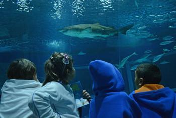 Crianças visitam o AquaRio, no Rio de Janeiro. Foto: UnicRio/Pedro Andrade