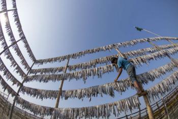Segundo a FAO, a atividade pesqueira ilegal retira do mar 26 milhões de toneladas de peixe, valendo US$ 23 bilhões por ano. Foto: FAO/Zakir Hossain