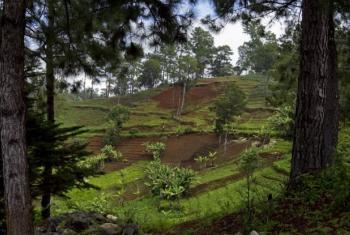 Para a FAO combater a poluição dos solos é essencial para tratar o problema da mudança climática. Foto: ONU/Logan Abassi