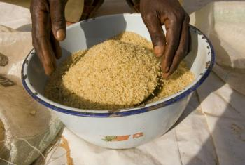 A FAO aumentou a previsão de produção mundial de cereais. Foto: Arne Hoel / Banco Mundial
