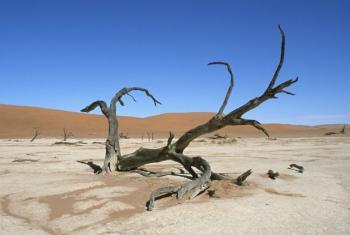 Seca extrema é uma das consequências das mudanças climáticas. Foto: Philip Schuler / World Bank
