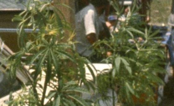 Буддисты и марихуана чем бороться с коноплей