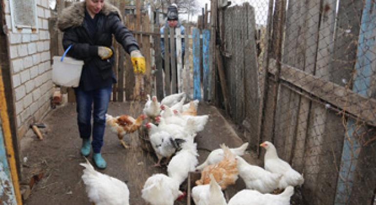 Женщина-фермер кормит своих кур, Луганск, Украина. Фото ФАО / Алексей Филиппов