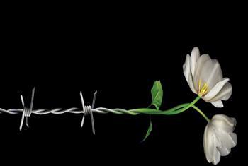Эмблема Дня памяти жертв Холокоста. Фото ООН