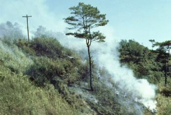 Лесной пожар. Фото ООН