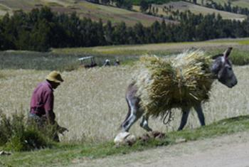 Перу. Фото МАГАТЭ