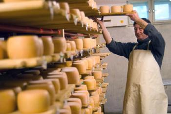 Сыроварня в Львове. Фото МФК